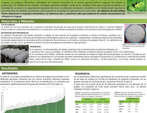 [CURLN] Evaluación de antixenosis y tolerancia de de Schizaphis graminum (Hemiptera: Aphididae) en cebada.