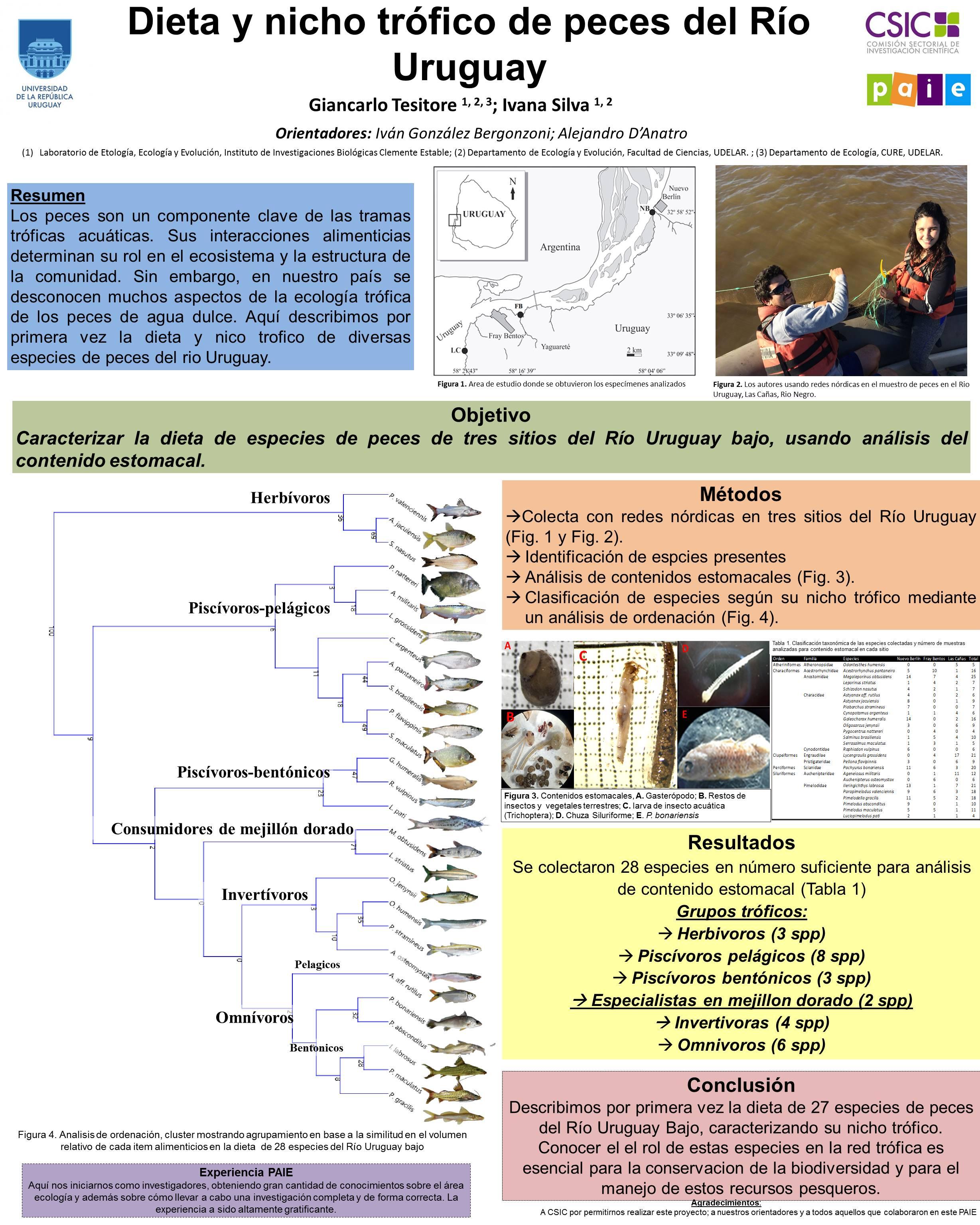 Dieta y morfología digestiva en peces del Río Uruguay